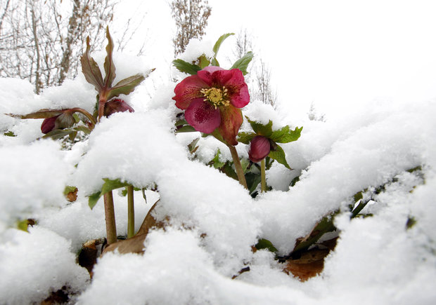 Plants-That-Can-Make-Your-Garden-Beautiful-Even-in-The-Winter