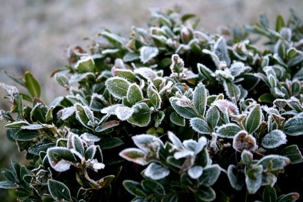 winter-potted-plants2